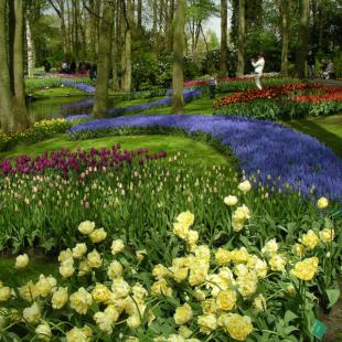 Keukenhof, el gran parque de flores