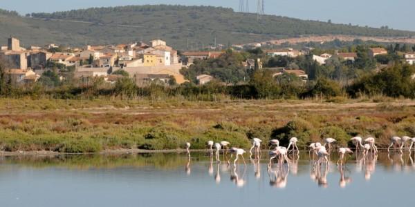 Sète – Cap d'Agde (40 km)