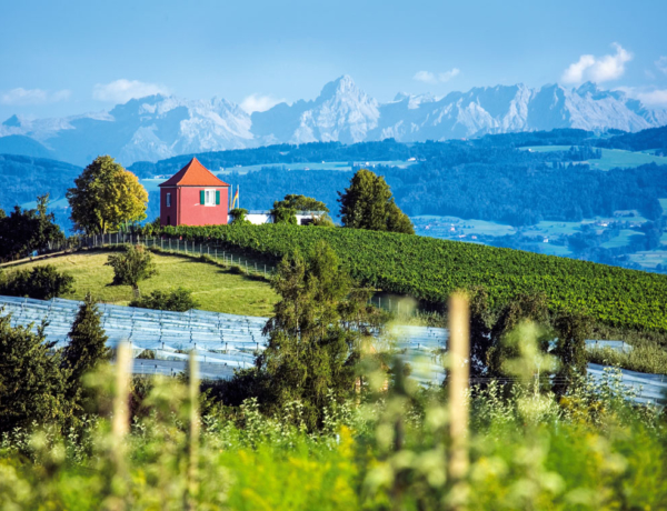 Alemania Lago Constanza Immenstaad Vista Alpes