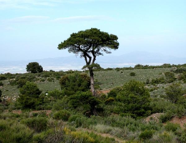 Viaje al Altiplano, de Granada a Baza y regreso