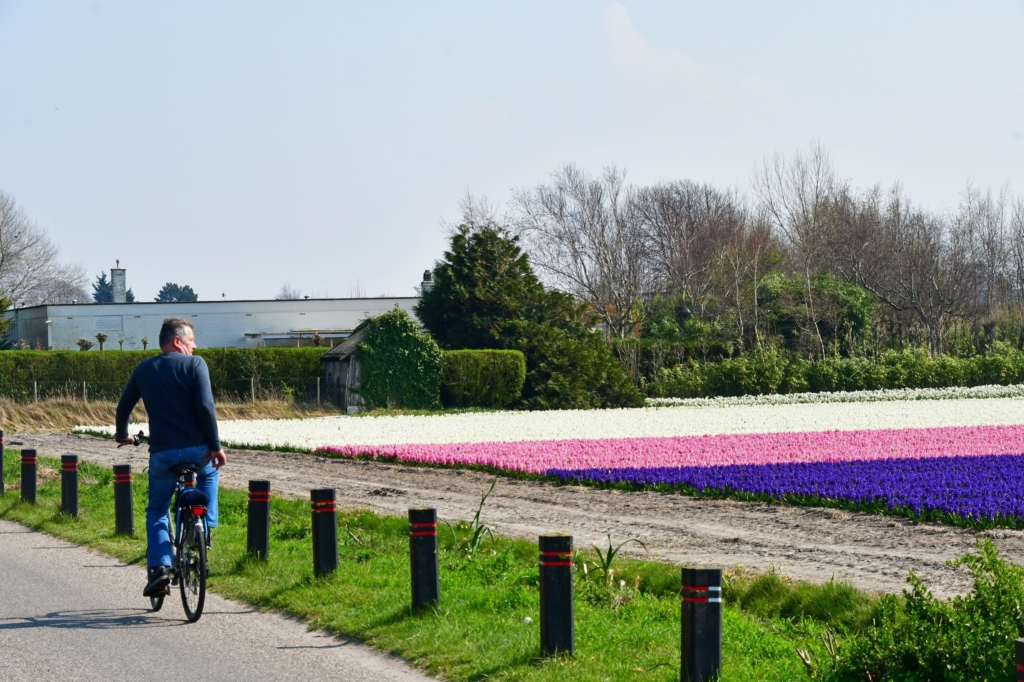 Ciclista Campos Jacintos Holanda Web
