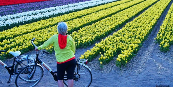 Tulipanes al norte de Amsterdam (Holanda)