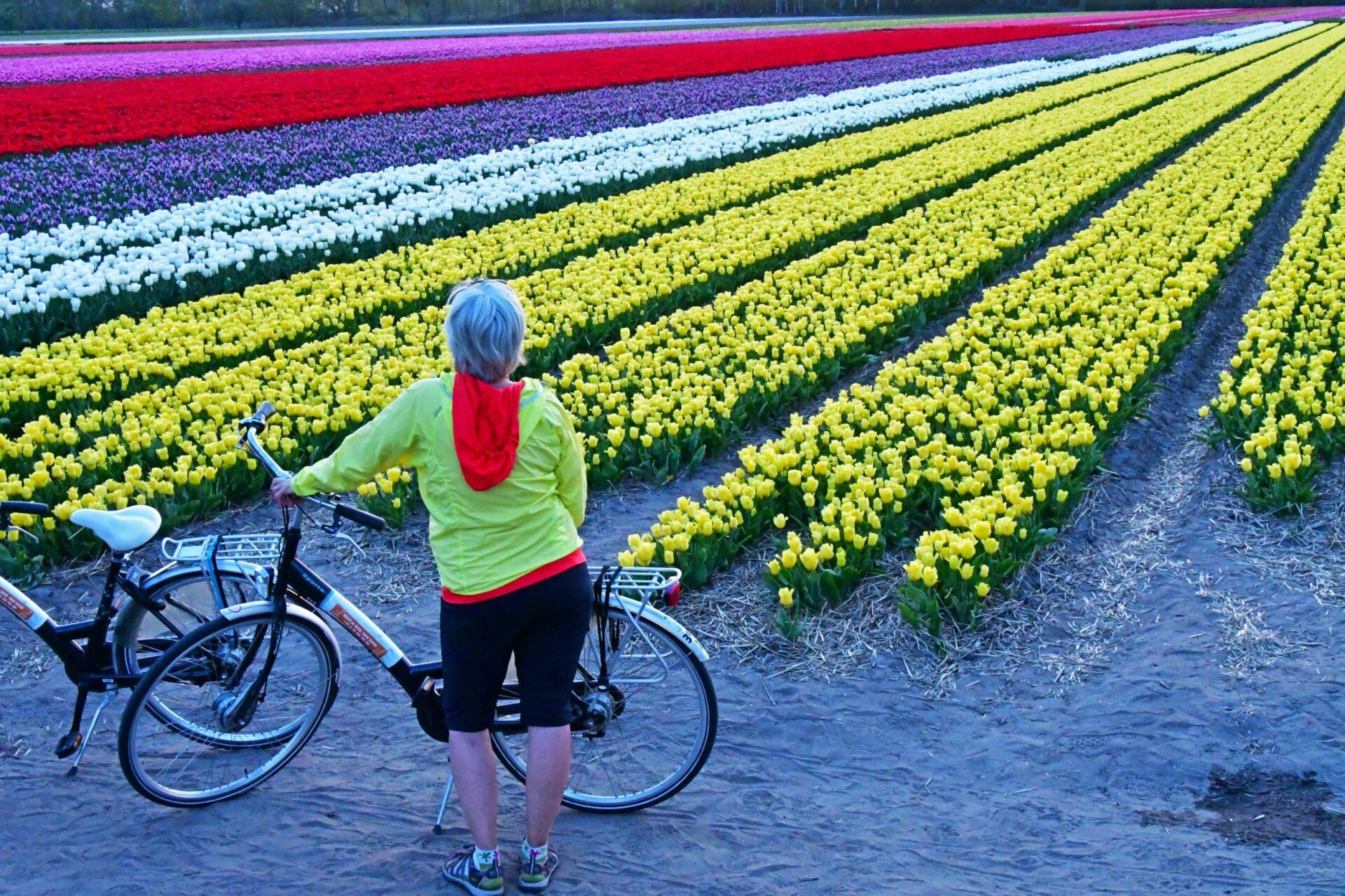 Al Norte de Holanda en bici: Campos de tulipanes