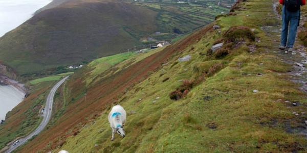 Camino de Kerry- Kells-Glenbeigh