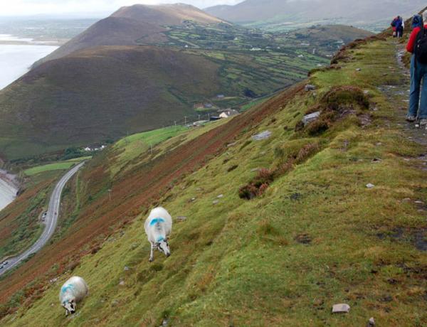 Irlanda: Guiado por el Anillo de Kerry
