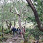 The Lake of Killarney y el Gap of Dunloe: 11 km, 215 m ascenso