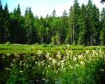 Fotos Viajeras – Alemania y Suiza, La Selva Negra en bicicleta