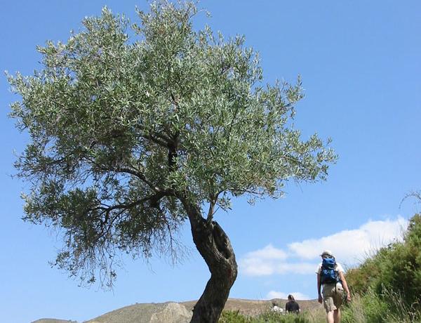 Excursión a pie, Granada (Sierra Nevada)