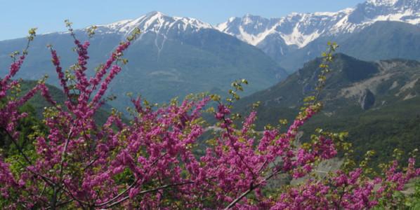 Destino sugerente y desconocido: Albania