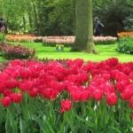 Día 3:  Haarlem-Keukenof-Oude Wetering, 40 km